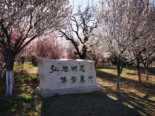 山师官网1.png
